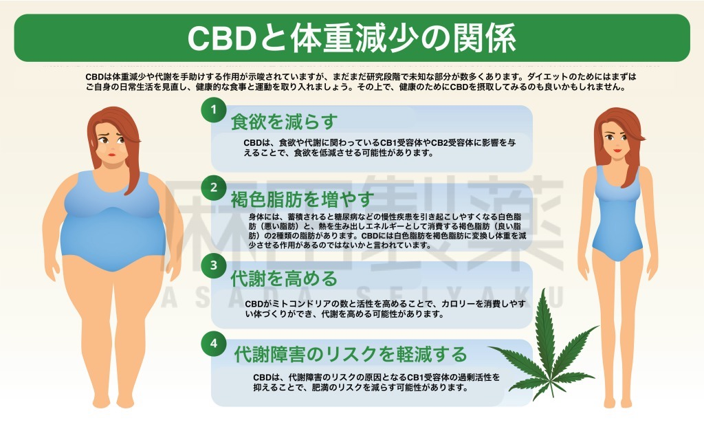 CBDによる体重減少のメカニズム