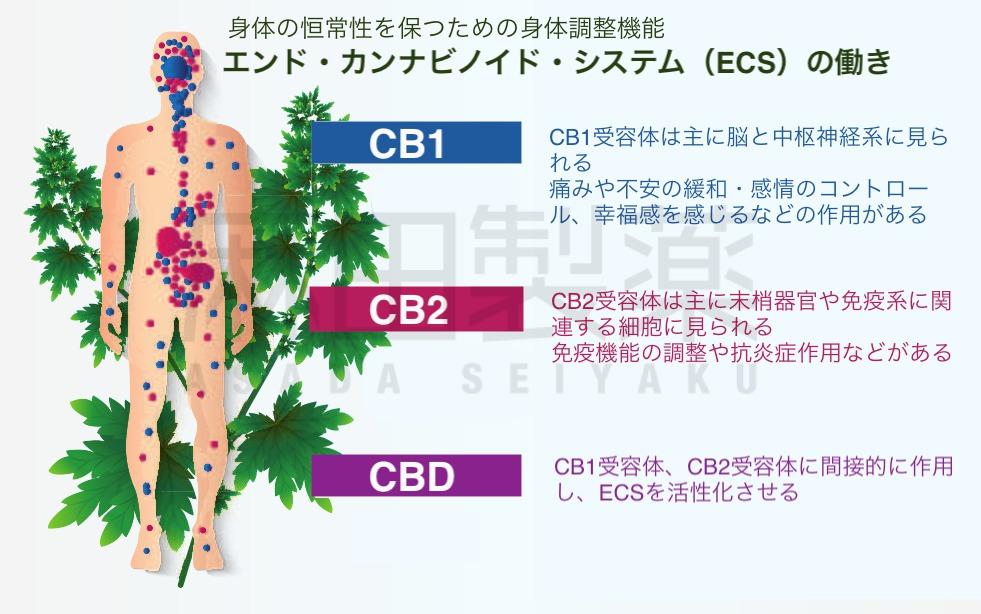 エンド・カンナビノイド・システム(ECS)とは
