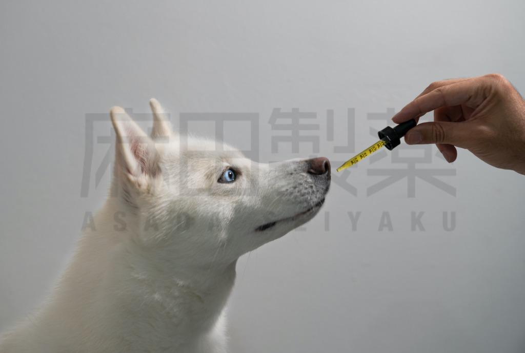 CBDの犬の摂取