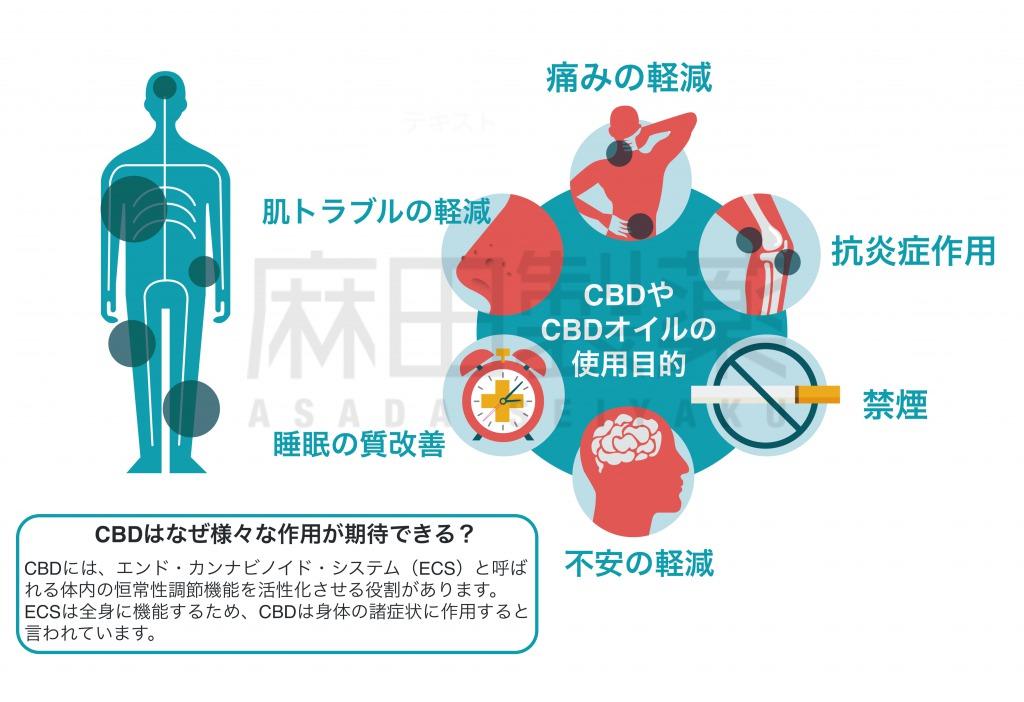 CBDやCBDオイルの作用とECS