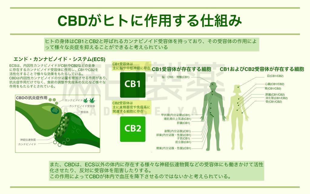 CBDとエンド・カンナビノイド・システム(ECS)