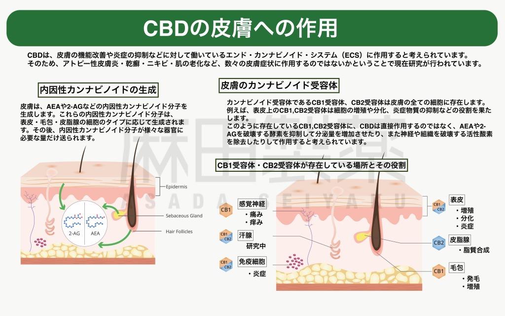 CBDやCBDオイルの皮膚への作用