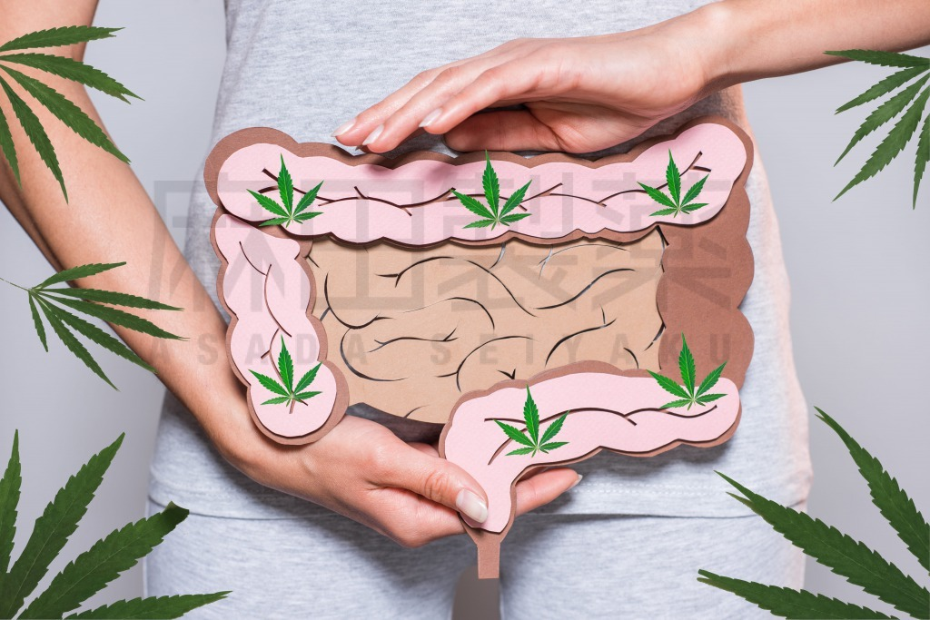 CBDやCBDオイルと腸
