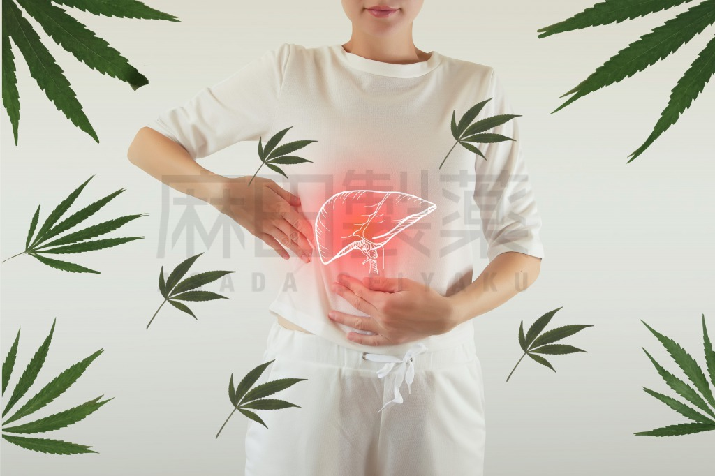 CBDやCBDオイルと肝臓