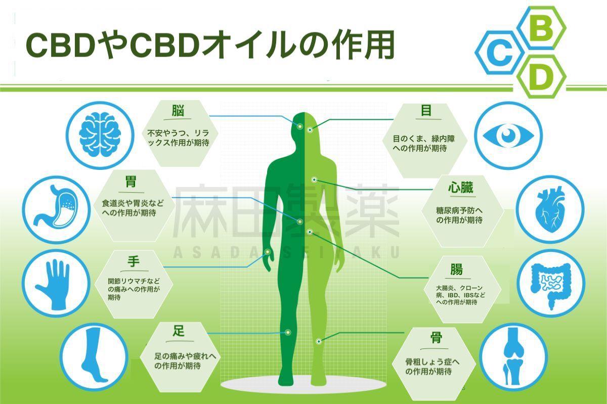 CBDオイルの作用