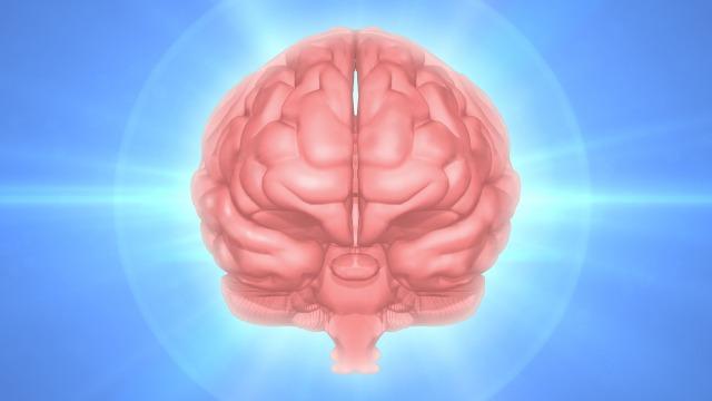 CBDやCBDオイルは脳震盪後症候群にも作用する?エビデンスも紹介!
